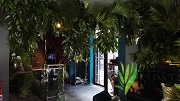 Jungle Theme3