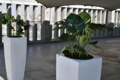 Square HG Monstera Rooftop