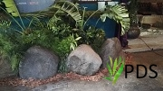 Plantscaping with Rocks4