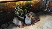 Plantscaping with Rocks1