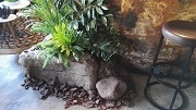 Plantscaping with Rocks2
